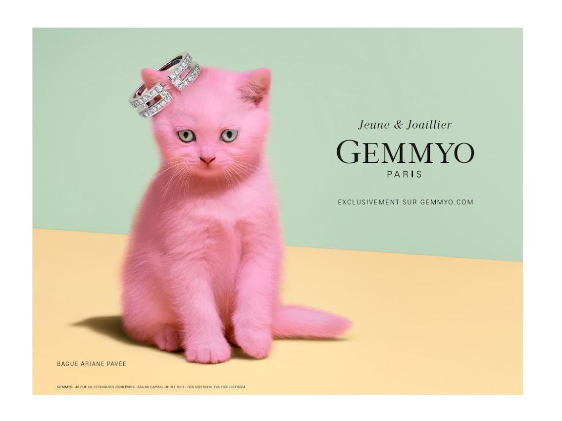 chat campagne gemmyo